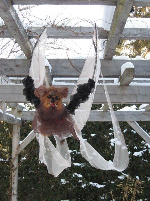 The Little Brown Bat